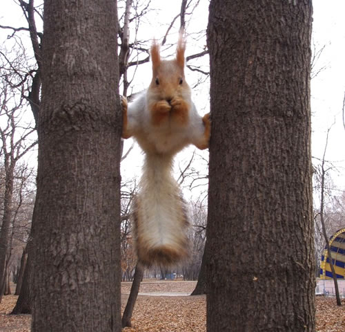 squirrel-on-two-trees.jpg